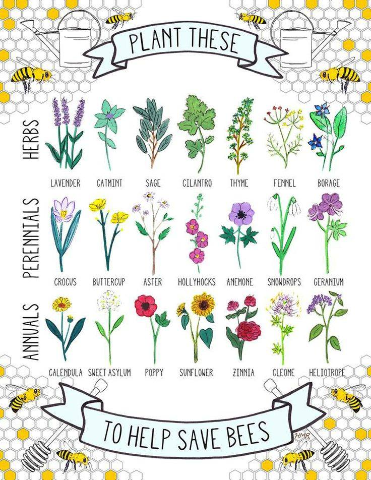 best-flowers-for-bees
